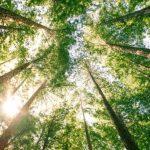 La mindfulness: un antidoto